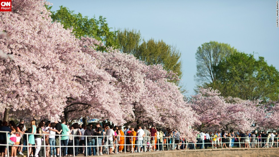 "More than 1.5 million people travel to the capital to see these blooming flowers, according to the <a href=""http://www.nationalcherryblossomfestival.org/about/history/"" target=""_blank"">National Cherry Blossom Festival's</a> website."
