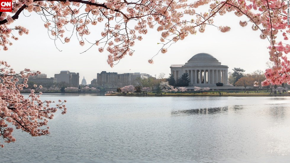 Here, the cherry blossoms overlook the Tidal Basin in Washington.