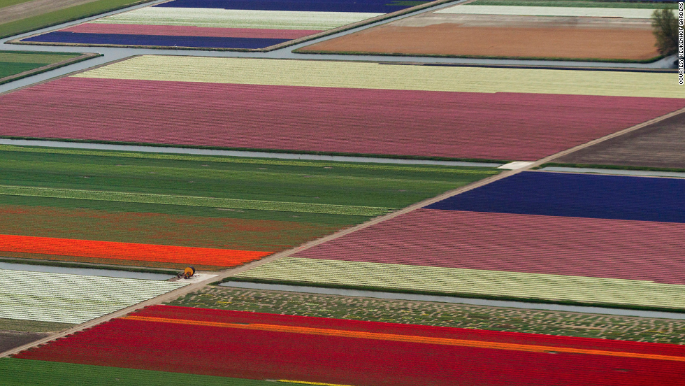 From March through May, millions of tulips draw visitors to Keukenhof Gardens near Lisse, Netherlands.