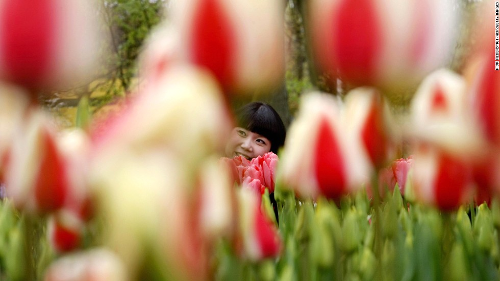 "The ninth happiest country is the <strong>Netherlands</strong>, where you can enjoy the flowers at the <a href=""http://www.keukenhof.nl/en/"" target=""_blank"">Keukenhof gardens</a>. You'll find long fields of tulips throughout the region. People in Netherlands can enjoy better than average quality of life in many of the key indicators, such as work-life balance, housing or health status. However, the country ranks below average in environmental quality. And according to the OECD, the percentage of Dutch people reporting that they trust the government fell from 66% to 54% between 2007 and 2013."