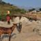 Uganda Rwenzori Mountains communities livestock