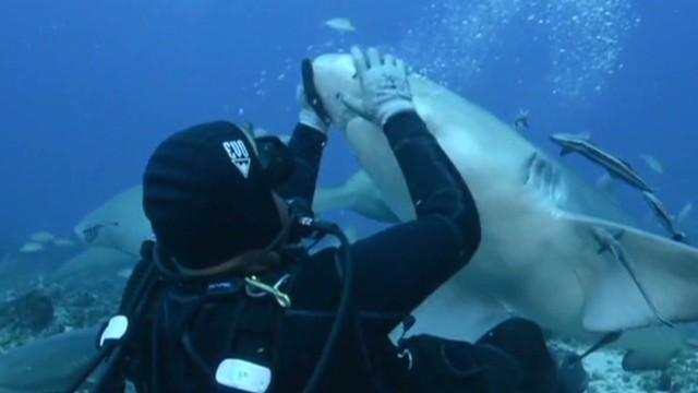 mxp vo charges shark feeding _00002003.jpg