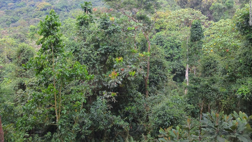 Bwindi Impenetrable National Park covers 32,000 hectares and is known for its exceptional biodiversity, with more than 160 species of trees and over 100 species of ferns.