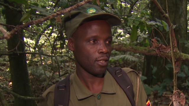 spc inside africa uganda gorillas a_00061727.jpg