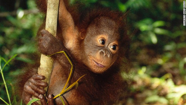 The Borneo leg of the trip offers the chance to see little guys like this.
