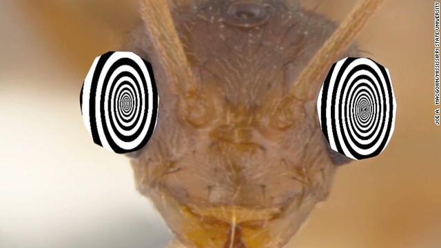 pkg azuz crazy ants_00000106.jpg