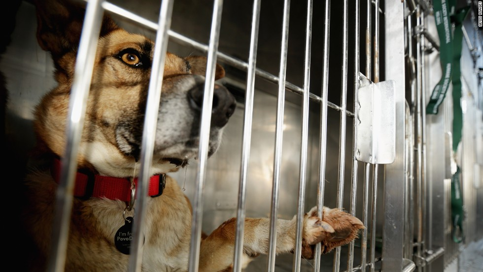 A stray dog waits in its travel crate at the Washington Animal Rescue League shelter.