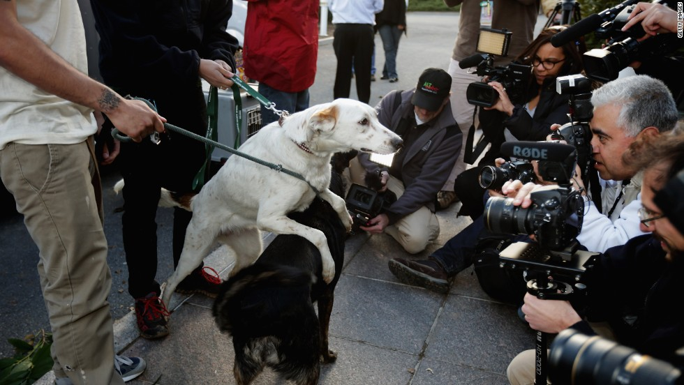 Ten stray dogs, displaced during the 2014 Winter Olympics in Sochi, Russia, have arrived in the United States for adoption.