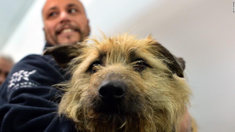 Sochi Dogs Adoption