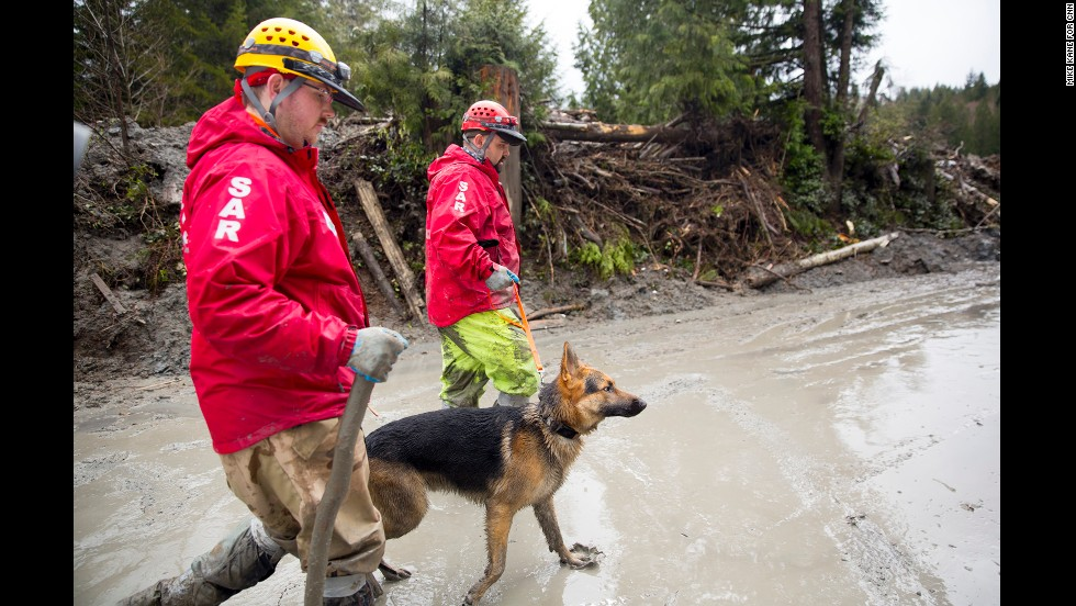 A rescue dog and its handlers work the site of a catastrophic landslide near Darrington, Washington, on Saturday, March 29. A week earlier, a landslide crossed the North Fork of the nearby Stillaguamish River, causing multiple deaths and massive damage to homes.