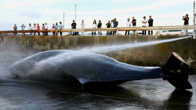 Court orders Japan to end whale hunt