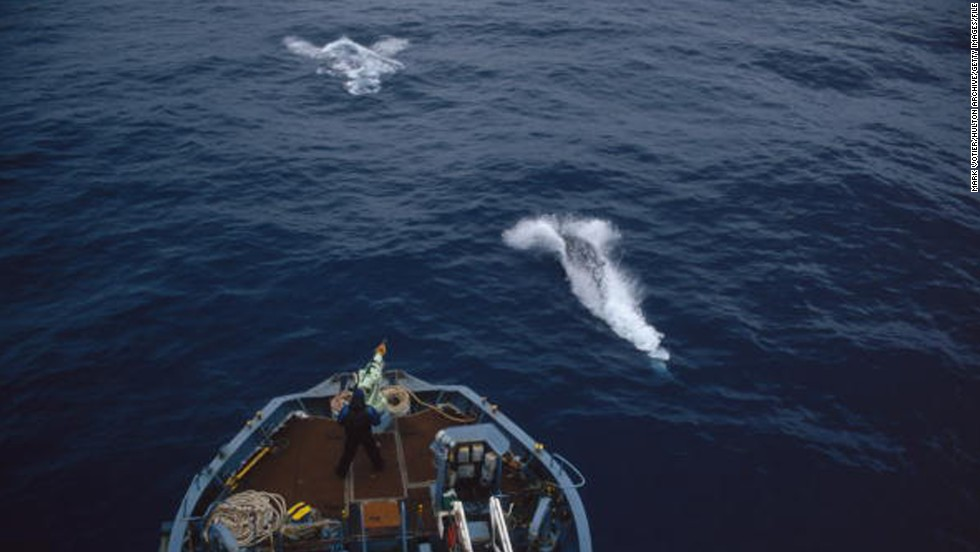 "A crew member mans the harpoon on a Japanese whaling vessel in the Antarctic in 1993. Japan has gotten around the international ban on whaling by saying it's conducting ""scientific research,"" but the U.N. International Court of Justice banned the practice, ruling that the ""scientific research"" rationale is a smokescreen for commercial whaling."