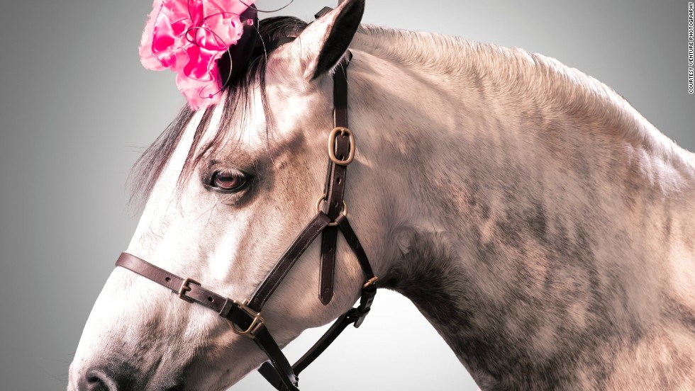 """The four-legged models ranged from thoroughbreds, to show horses, and smaller ponies used to teach children riding. Each was accompanied by their owner. """"We walked the horses around the studio until they felt comfortable -- they were very well behaved, each session only took a few minutes,"""" said Mayfield."""