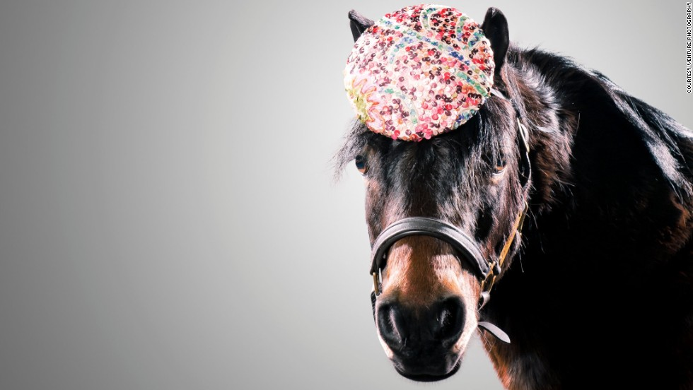 """I spend my days creating weird and wonderful designs for fashion-forward ladies, but never did I think I'd be styling my hats on models of the four-legged variety,"" said Olivia."