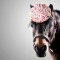 horses in hats freckle