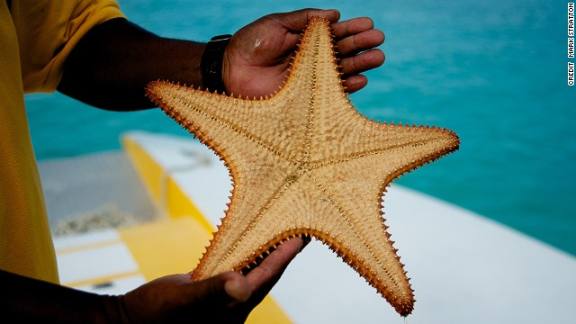 The Exuma islands attract starfish and celebrities.