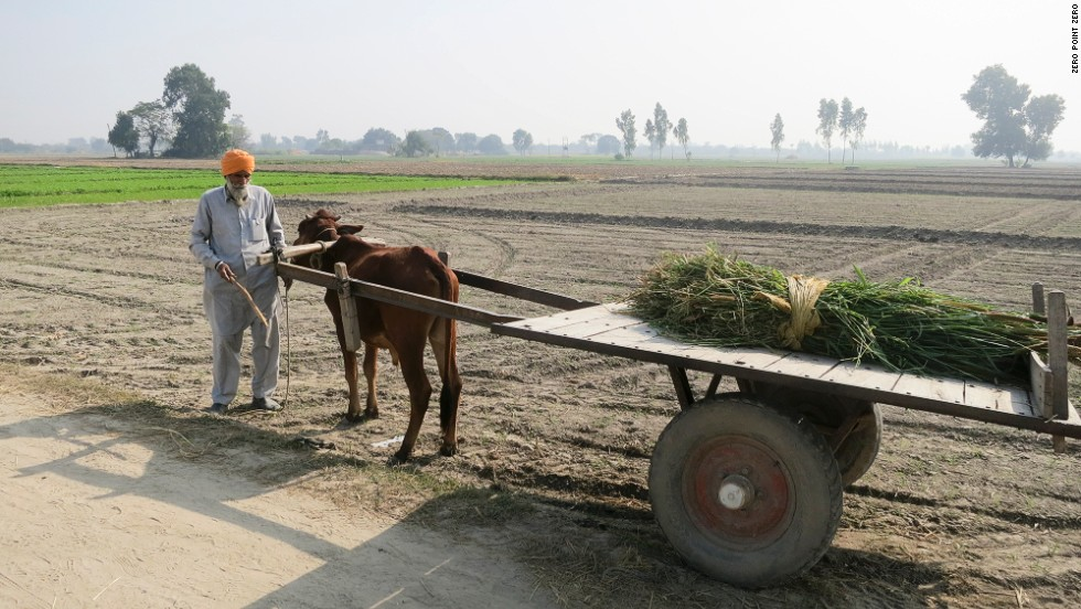 A farmer works along the border between India and Pakistan.
