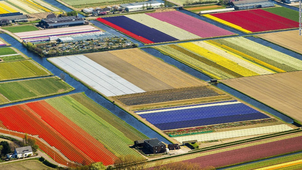 A area of land takes on the appearance of a patchwork quilt in Lisse, Netherlands, on Wednesday, April 9. The tulip season began  in March and lasts until August.