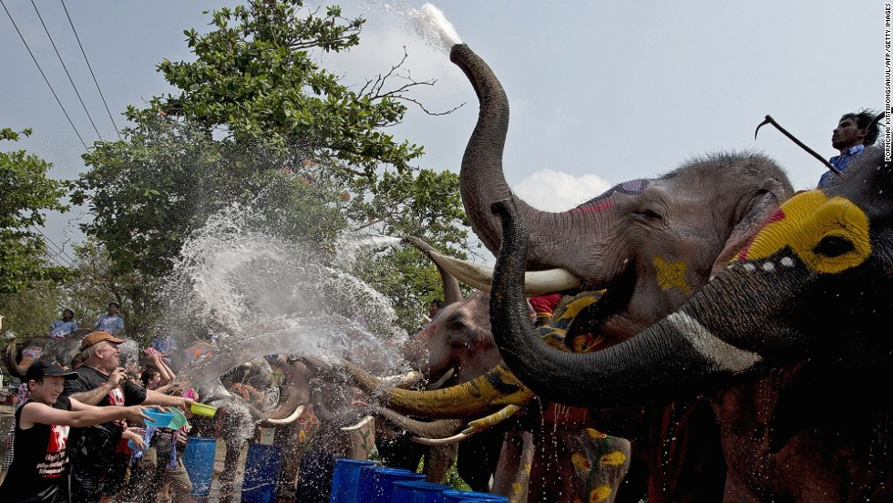 Hardly a fair fight. Tourists take on a row of elephants in Thailand's Ayutthaya province.