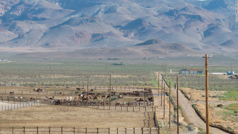 Horses stand behind a fence at the U.S. Bureau of Land Management's Palomino Valley holding facility in Reno, Nevada, on June 5, 2013. More than 80% of the land in Nevada is federally owned.