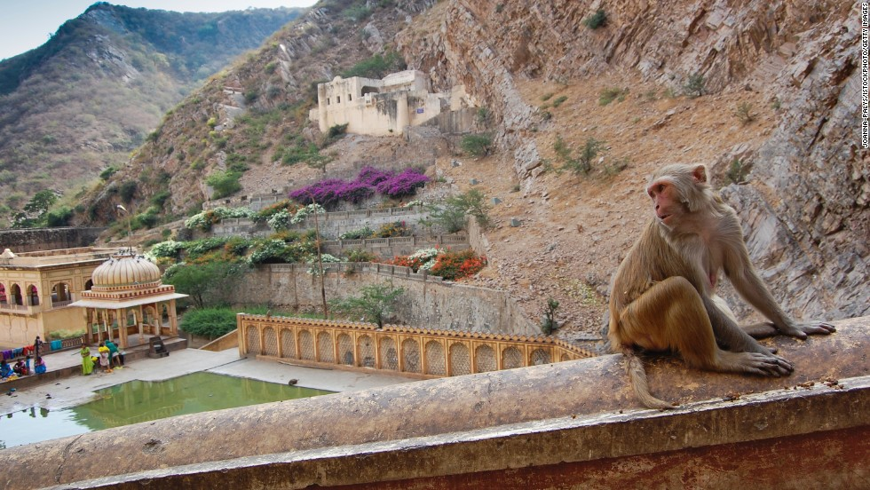 Sometimes nature and man-made endeavors overlap, as is the case at the Galtaji temple complex near Jaipur, India. One of the temples is known as Monkey Temple after the area's resident monkey tribes.
