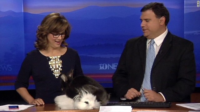 mxp bunnies on anchor desk_00001030.jpg