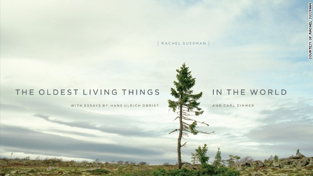 "Rachel Sussman's new book, ""The Oldest Living Things in the World."""