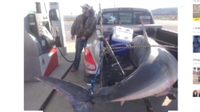 dnt mako shark caught_00003321.jpg