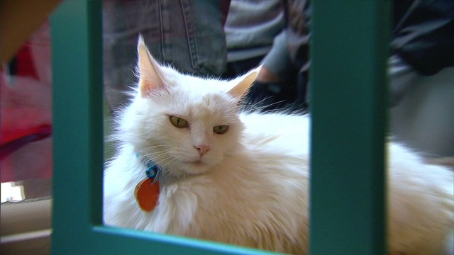 Cat cafe pops up in New York