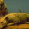 Best USA odd history-lions