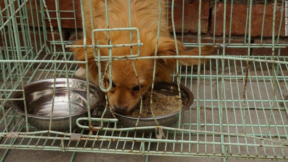 Members of the Yinchuan Stray Animals Home charity rescued 5 stray dogs who survived an apparent mass burial.