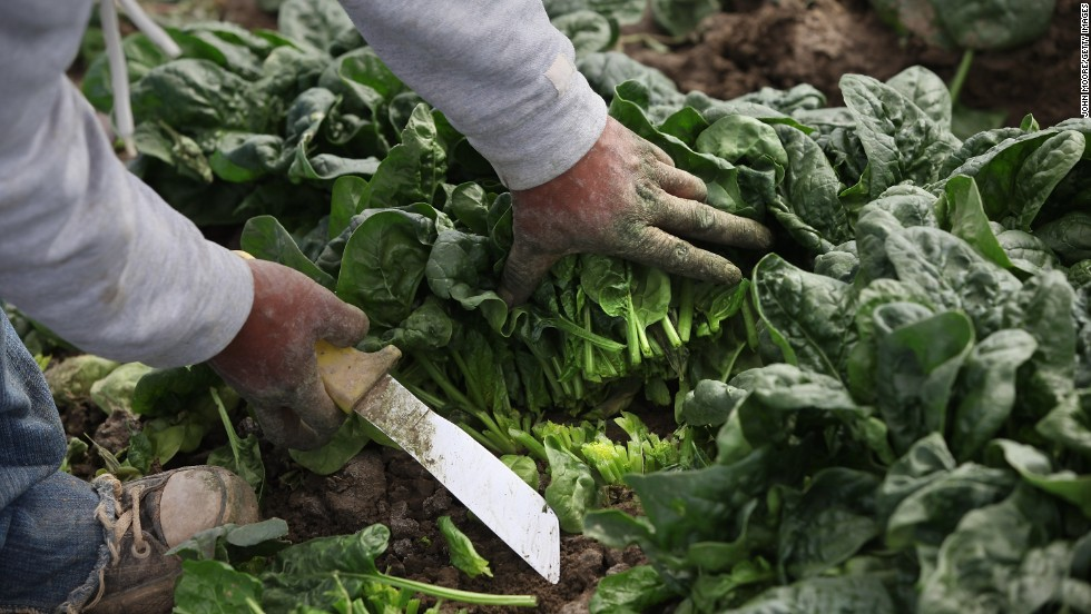 "Spinach ranks No. 6 on the ""Dirty Dozen"" list. Leafy greens such as kale and collard greens also may contain insecticides, although they are not ranked, the group says."