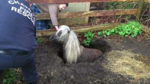 pkg mini horse sinkhole_00010510.jpg