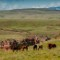 crow fair rodeo reservation landscape