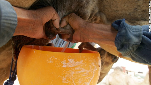 Camels are better suited to dry climates and their rich, earthy milk has more fat and protein.