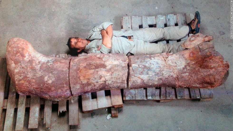A paleontologist lies next to a fossilized femur.