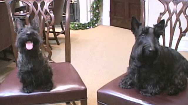 vo bush family dog beazley dies_00002104.jpg