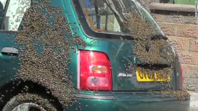 erin intv edwards keilar bees take over car britain_00001705.jpg