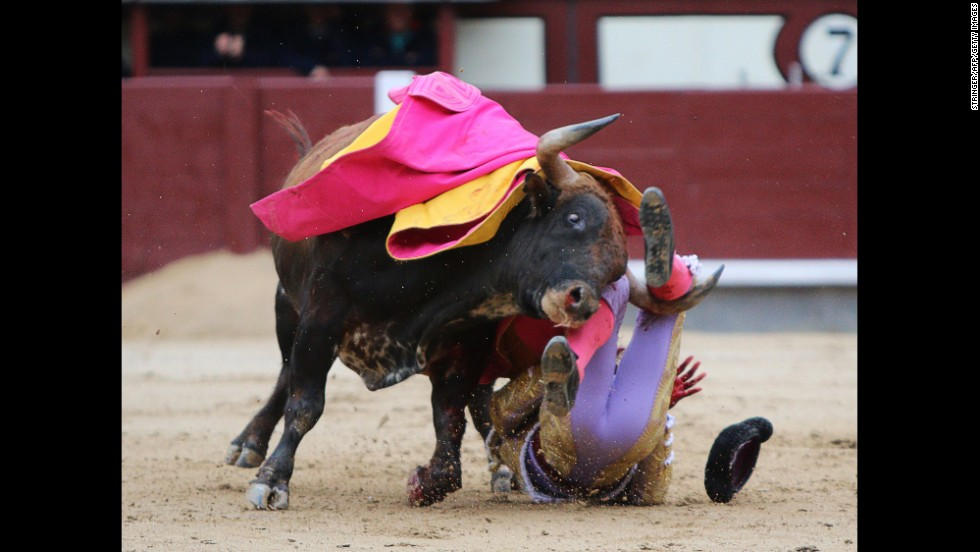 Matador Antonio Nazare is injured by a bull during the festival in Madrid on May 20.