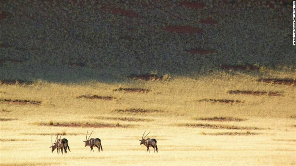 Last year, a paper was published in Science by professor Norbert Juergens claiming that fairy circles were the work of a species of sand termite, psammotermes allocerus.