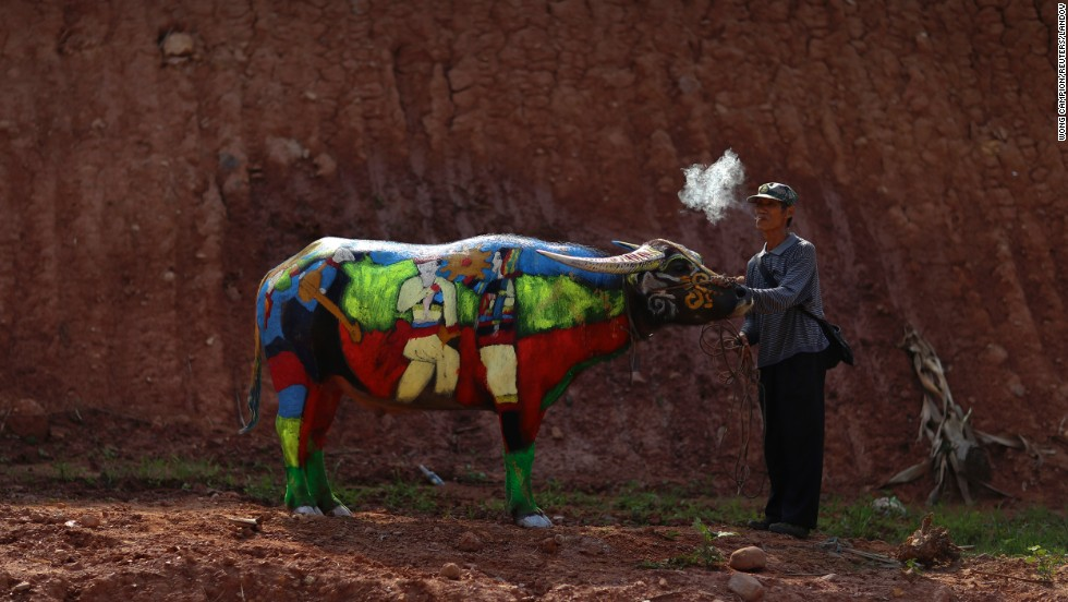 A man smokes as he waits with his painted buffalo Sunday, May 18, in China's Yunnan province. First prize in the buffalo-painting contest was worth 100,000 yuan (about $16,000).