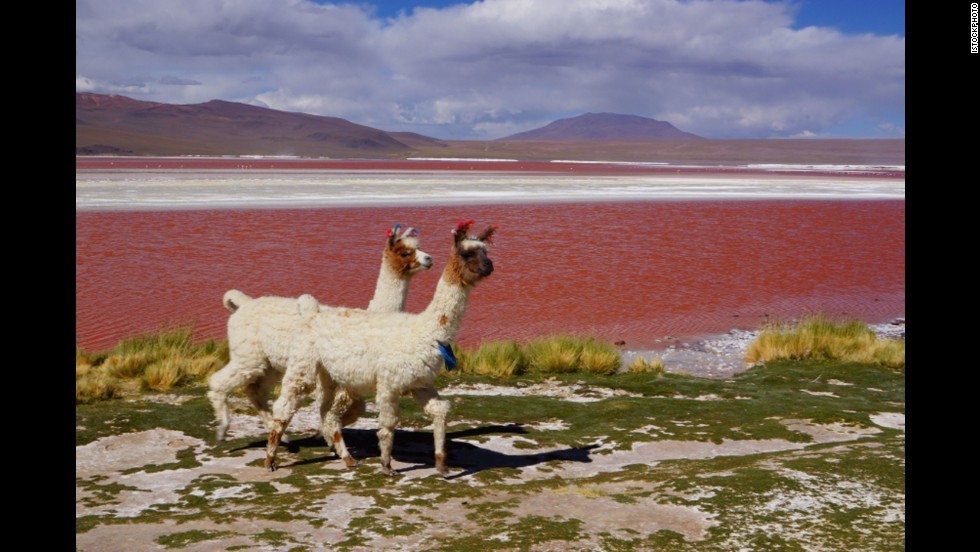 The russet-red Laguna Colorada reportedly influenced the great painter, Salvidor Dali, who once traveled to this far reach of Bolivia seeking inspiration.