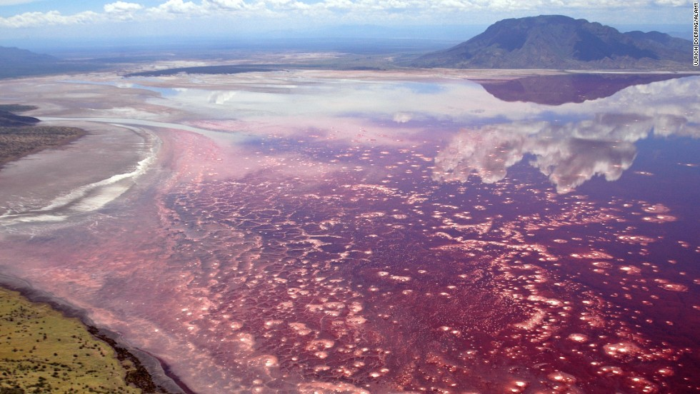 Tanzania's Lake Natron, where temperatures can reach 140 degrees, literally turns animals into stone.