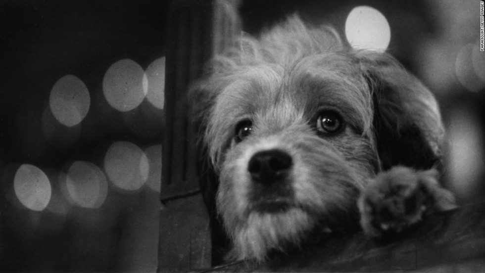 """Benji,"" about a goodhearted stray dog who saves the lives of two children, was a sleeper hit. It was among the top 10 box-office successes of 1974 and spawned a number of sequels."