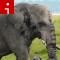 elephants.irpt