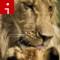 lions.irpt