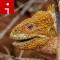 lizard.irpt