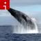 whale.irpt