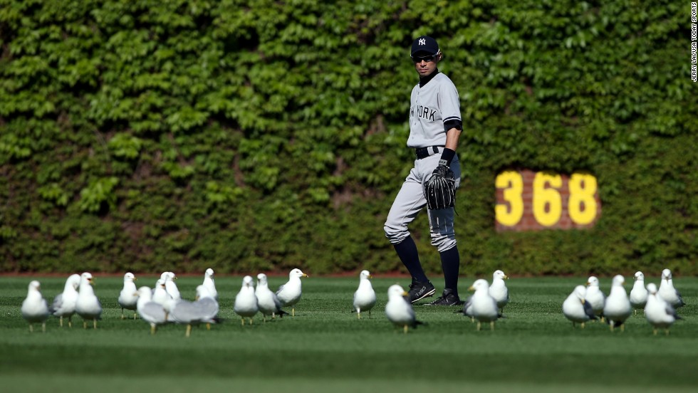 Ichiro Suzuki of the New York Yankees watches seagulls as they gather in the outfield during a game at Chicago's Wrigley Field on Wednesday, May 21.