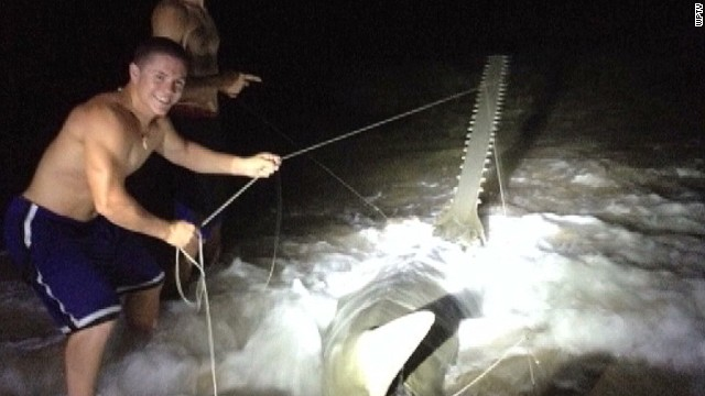 dnt fl rare large sawfish captured_00005321.jpg